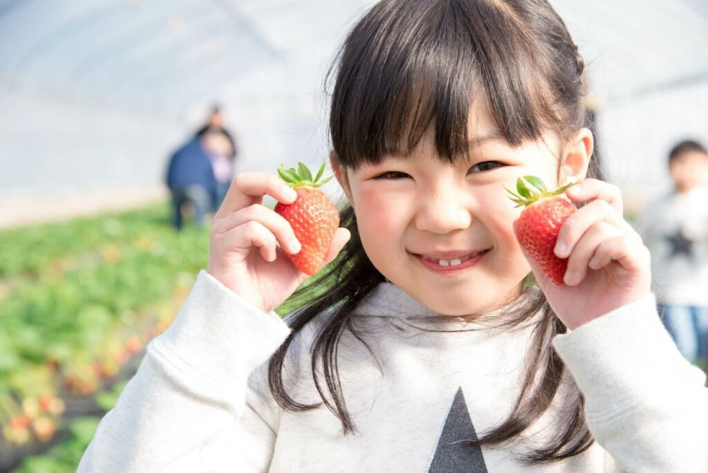 A young girl holding up two bright red strawberries in a greenhouse in Fukuoka, Japan.